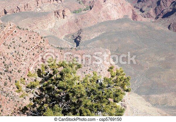 Grand Canyon - Arizona - csp5769150
