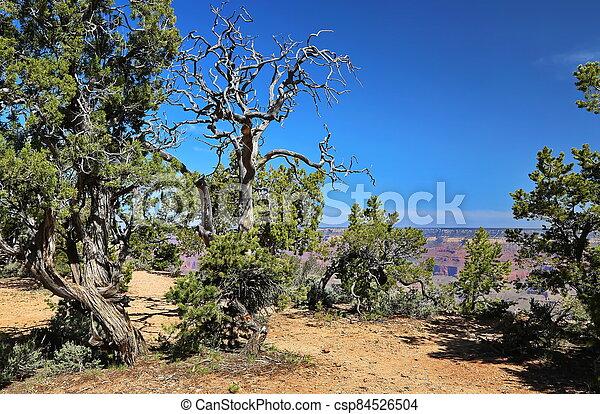 Grand Canyon in Arizona - csp84526504