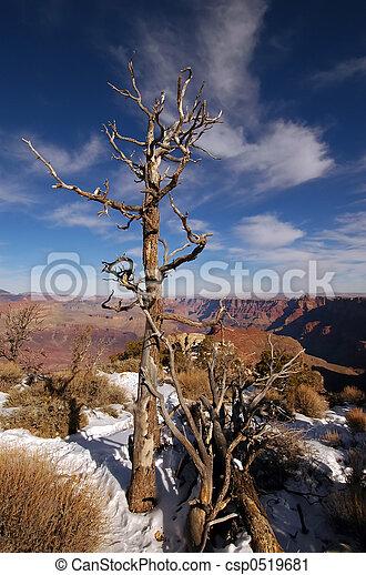 Grand Canyon - csp0519681