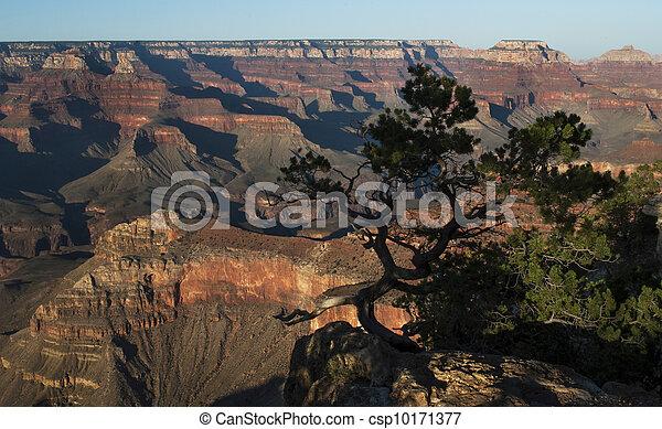 Grand Canyon - csp10171377