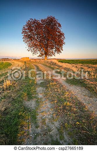 grand, champ, arbre - csp27665189