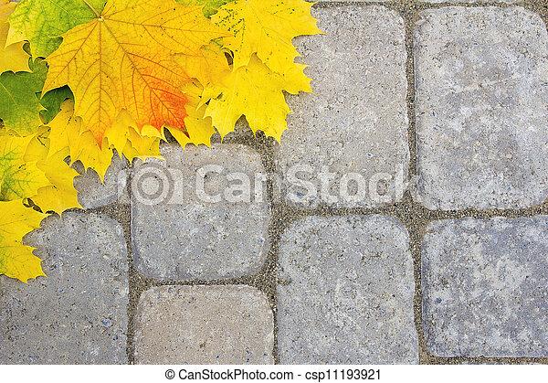 grand, paver, feuilles, patio, érable - csp11193921