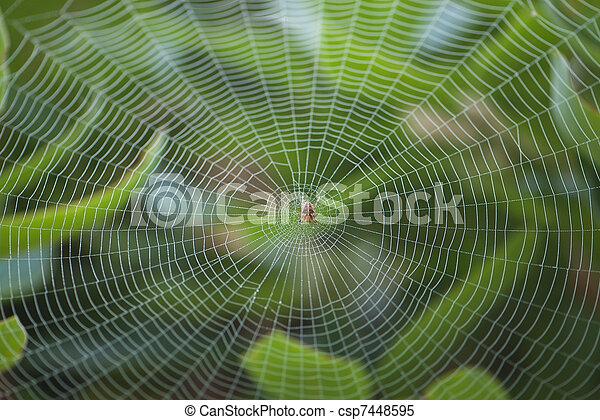 grand, toile, centre, araignés - csp7448595