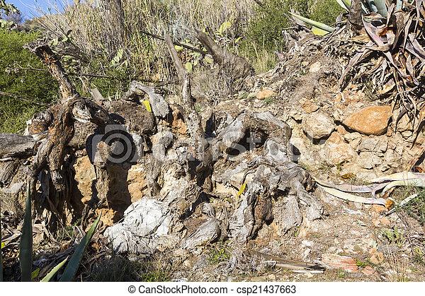 Grande Cactus Seco Muerto - Cactus-seco