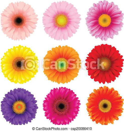 Flores grandes y coloridas - csp20086410