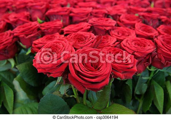 grande, grupo, rosas vermelhas - csp3064194