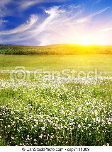 grande, nature., sunrise., campo, fiori, composizione - csp7111309