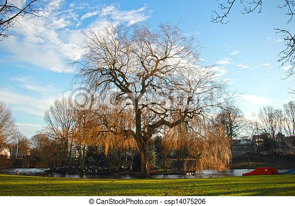grande, parque, árvore - csp14075206