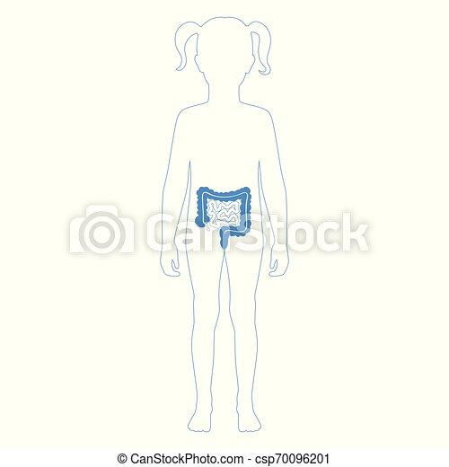 grande, pequeno, vetorial, intestino, ilustração - csp70096201