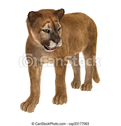 docena radio su  Grande, puma, gato. Puma, render, grande, isolado, gato, fundo, digital,  branca, 3d.