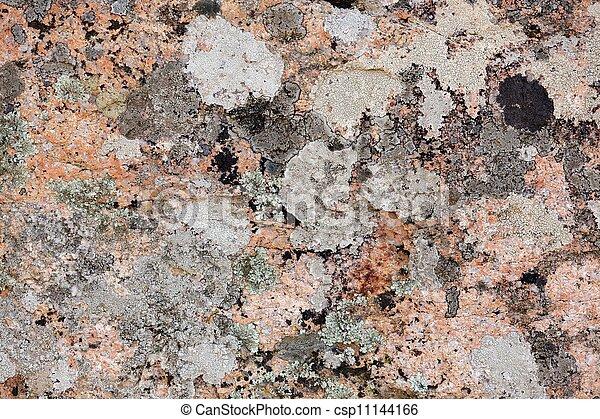 Lichen en granito - csp11144166