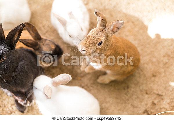 Lindo conejo en la granja - csp49599742