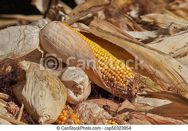 Cobs en la granja - csp50323954
