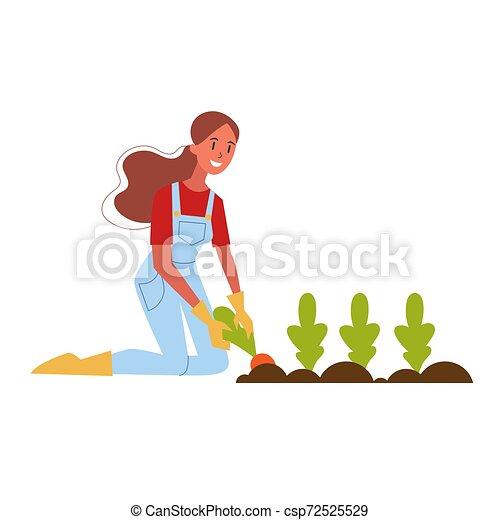 Mujer granjero cosechando zanahorias. Cosecha orgánica fresca - csp72525529