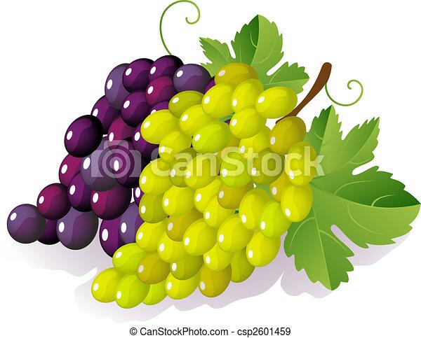 grape - csp2601459