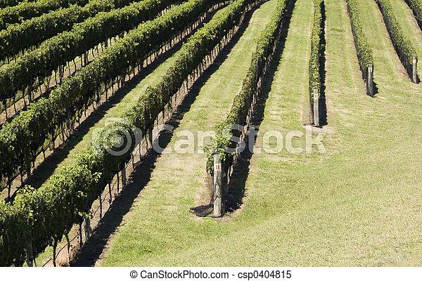 Grape Harvest - csp0404815