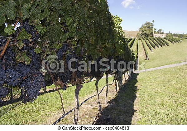 Grape Harvest - csp0404813