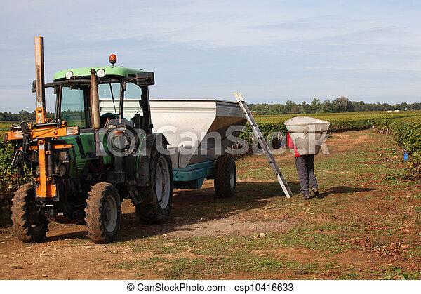 Grape harvest time - csp10416633