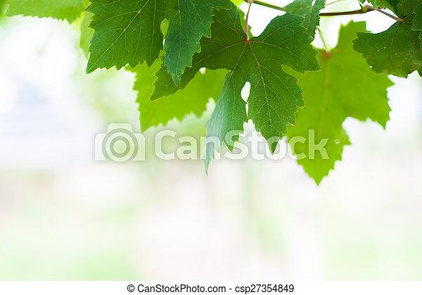 grape leaf in soft light - csp27354849