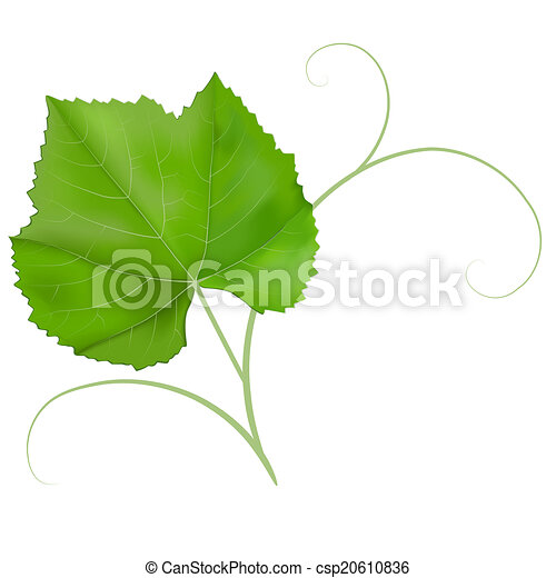 Grape Leaf Clipart And Stock Illustrations 20 208 Grape Leaf Vector Eps Illustrations And Drawings Available To Search From Thousands Of Royalty Free Clip Art Graphic Designers