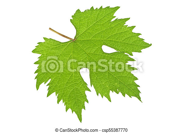 Grape leaf on white background - csp55387770