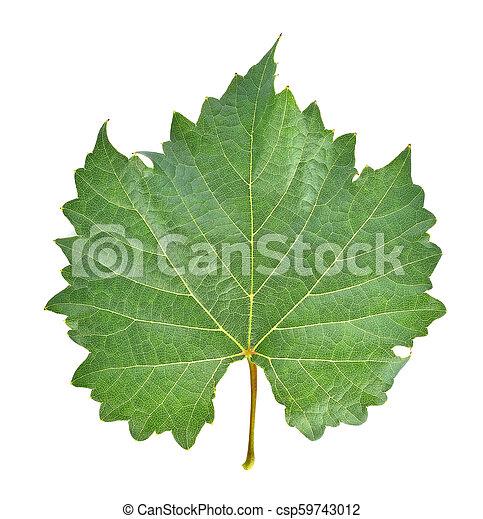 grape leaf on white background. - csp59743012