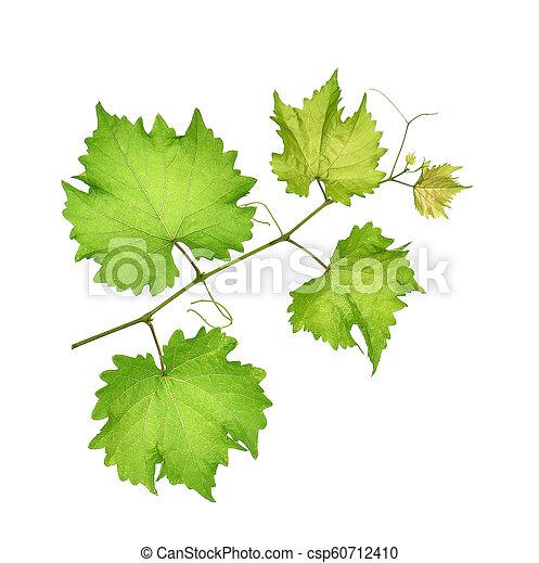 grape leaf on white background. - csp60712410
