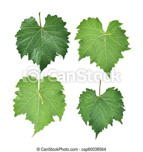 grape leaf on white background. - csp60038564