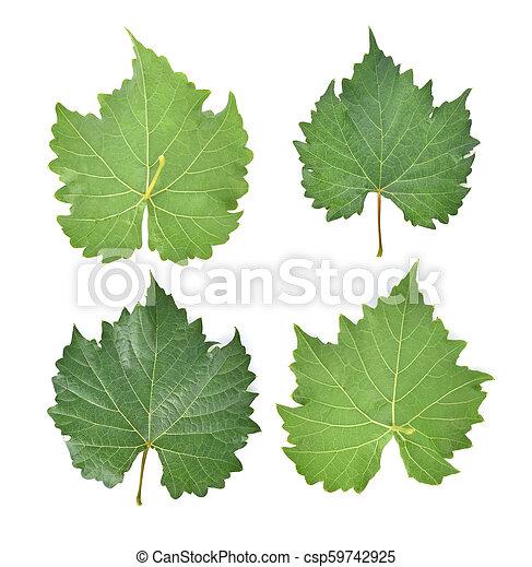 grape leaf on white background. - csp59742925