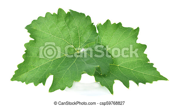 grape leaf on white background. - csp59768827