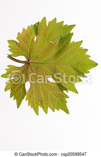 grape leaf - csp20599547