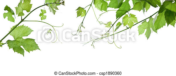 grape-leaves - csp1890360