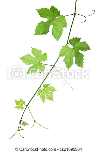 grape-leaves - csp1890364