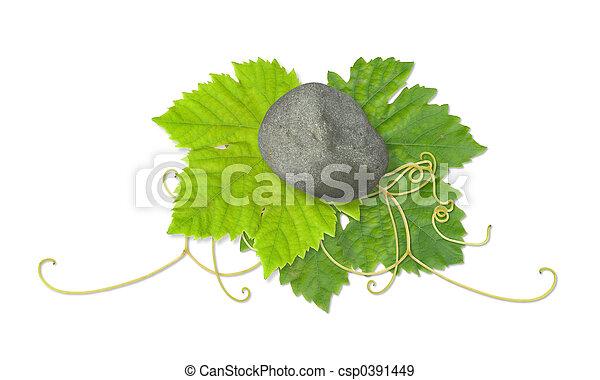 Grape leaves - csp0391449
