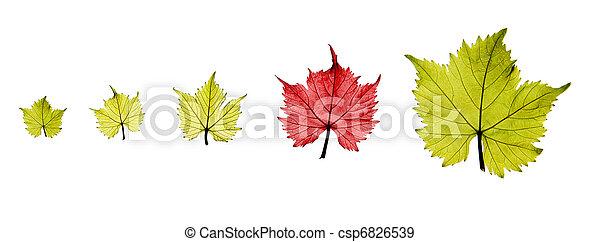 Grape leaves - csp6826539