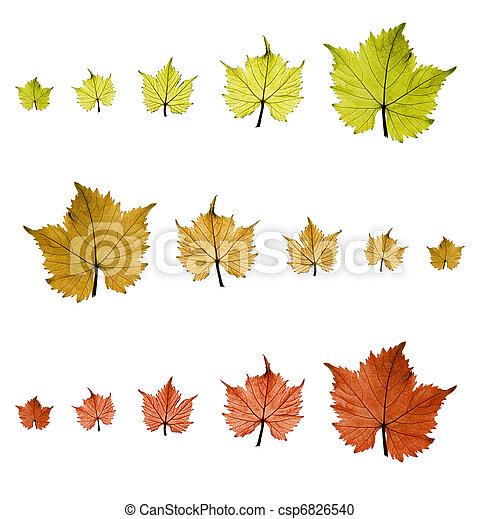 Grape leaves - csp6826540