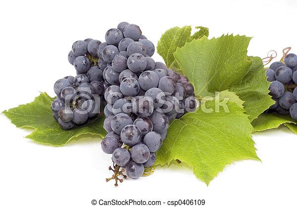 Grape - csp0406109