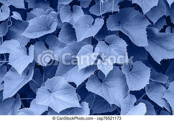 grape-vine, textura, garden., plantas, permisos de uva, botánico, contra - csp76521173