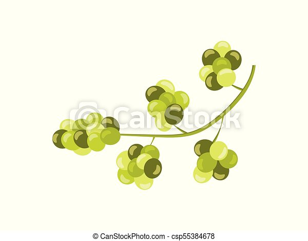 grape winny, odizolowany, ilustracja, tło., wektor, zielone winogrona, biały - csp55384678
