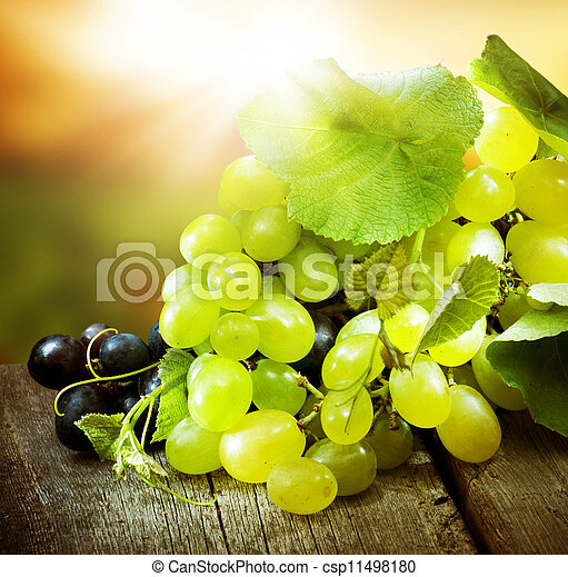 Grapes. Grapevine Over Vineyard Background  - csp11498180