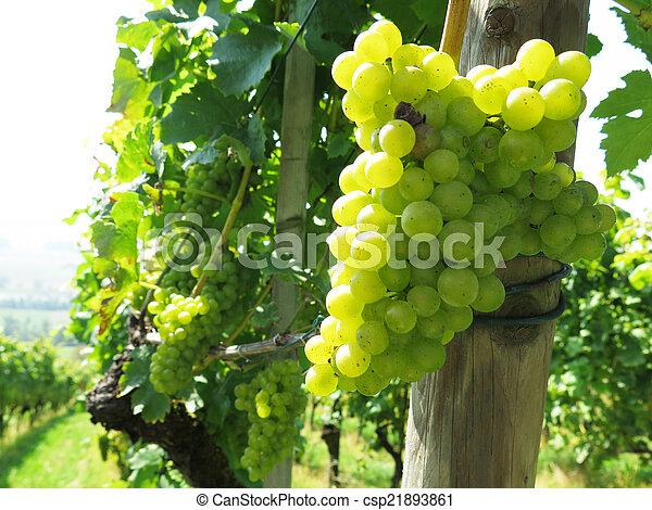 Grapes - csp21893861