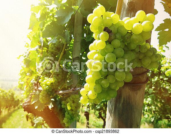 Grapes - csp21893862