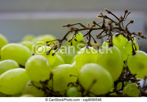 Grapes - csp9090546