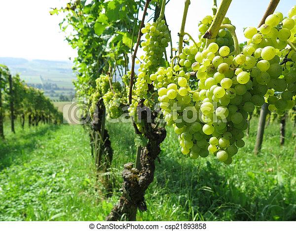 Grapes - csp21893858