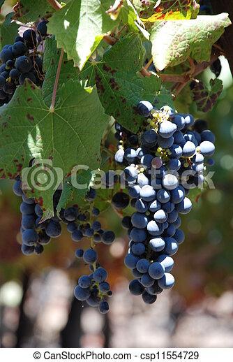 Grapes - csp11554729
