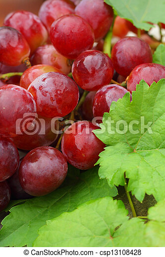 Grapes - csp13108428