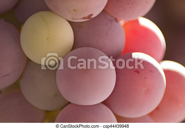 grapes - csp44439948