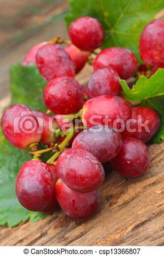 Grapes - csp13366807