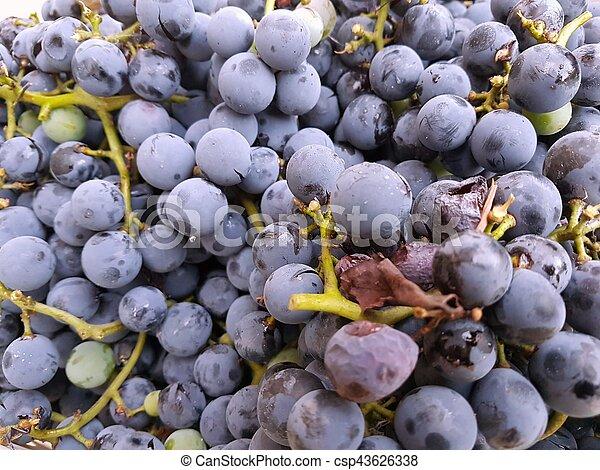 Grapes - csp43626338