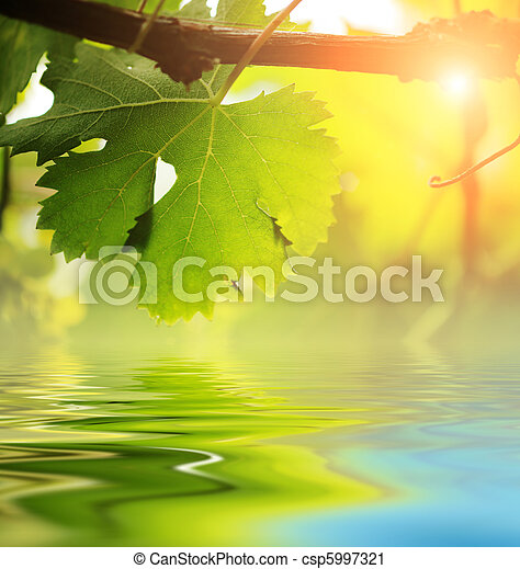 Grapevine leaf over water - csp5997321